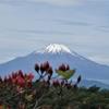 丹沢塔ノ岳~雪解けの富士山が美しい
