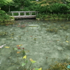 今や「モネの池」と呼ばれる 根道神社の「名もなき池」