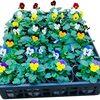 有為自然 595 「キメツの花壇」 無事 植え終わる