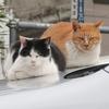 昨年の12月25日 落合界隈の猫さま とその情景