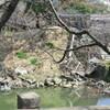 行幸坂一般開放で見られた熊本城の被害