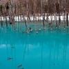 台風の影響で美瑛の「青の池」が見れなくなてるよ!