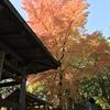 年末までの出展情報〜今週は京都三連発!〜