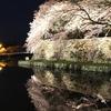 夜桜 彦根城