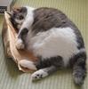 紙袋、捨てられないよね