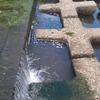 入間川と近くの水路で小鮒とり