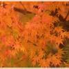 紅葉だより~馬見丘陵公園、奈良公園