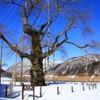 飛騨の冬景色 【荘川桜】
