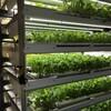 三菱化学による人工光型植物工場による機能性ベビーリーフ商品の生産・販売