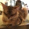 【猫カフェ】モカMoCHAラウンジ池袋東口店に行ってきました♪