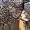 田園調布駅付近を散策な春