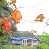 名残の秋薔薇(鎌倉文学館にて)①