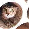 かわい過ぎる❤猫のケンカごっこ