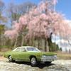 '74 DODGE MONACOに乗って、しだれ桜。