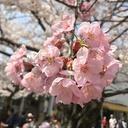 サクライフ ~ Sakura life ~