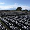 【鹿児島】宮崎からもアクセスの良い霧島市オススメスポット