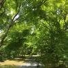 竜池山 弘川寺(ひろかわでら)は紅葉がきれいなお寺だった! その1