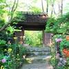 京都の嵯峨菊が咲く名所。