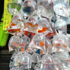 子供と海外旅行〜春は香港・30〜旺角love!金魚街は袋入り販売が減ってない??
