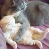 子猫を必死になって守る母猫