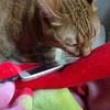 月に1度の面談日に、ケアマネさんと亡き猫さんを偲ぶ