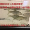 赤斑病にかかった魚の様子や薬浴の効果と結果を写真つきで紹介!