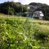 畑 vs 台風10号