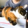 【愛猫日記】毎日アンヌさん#192