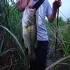 バスフィッシング(12)&川釣りに行こう!