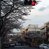 たまプラーザの桜 東急田園都市線 (500投稿目)