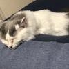 【猫ブログ】だめになるソファー