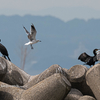2019年8月31日の鳥撮り-愛知県