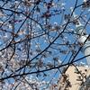 フライング気味の首都東京の春、モヤる自粛2週間延長、だが蕎麦は美味しい。