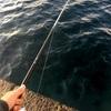 初めてのウツボ釣りと解体と調理