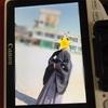 小学校の卒業式に袴をレンタルしたいのならお早めに!!