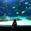 魚オタクの長女とサンシャイン水族館に家族旅行してきた!