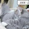 猫の道具 ~新・猫ハウスその後~
