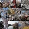 Instagramベスト9ふう、金澤桜百景2020年(その2)