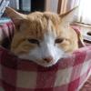 雨が降ってもウィルスは生き延びるし、猫はマイペース。