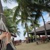 コタキナバルのおすすめ観光②:テングザルとホタル観賞ツアー