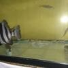 ディアナ水族館です。入場料はもちろん無料