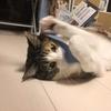 【愛猫日記】毎日アンヌさん#36