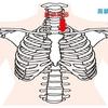 【解剖学Ⅱ-8】上肢の関節
