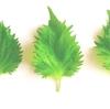 紫蘇=大葉の香りと意外な効果が!大量長期保存方法!