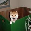 飼育箱(産箱)について ~犬の出産・子育て~