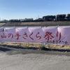 【息抜き】静岡・焼津でさくらを見るなら『朝比奈川堤山の手さくら」!