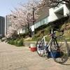 お花見サイクリングしてきました