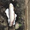 観賞魚の世界の中だけで展開される多産多死の食物連鎖