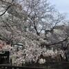桜が好きだ