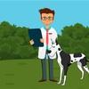 愛犬の健康のためのルーティン20選【愛犬の健康寿命を延ばそう】